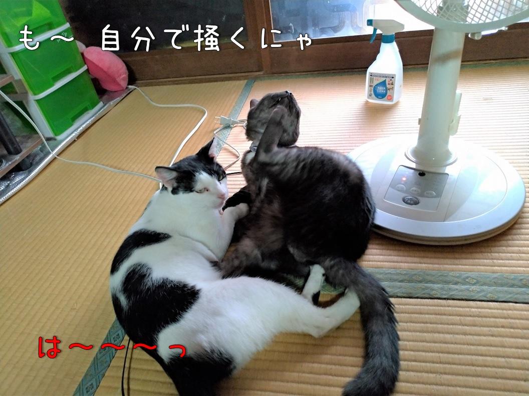 f:id:Harufuku:20200831113116j:plain