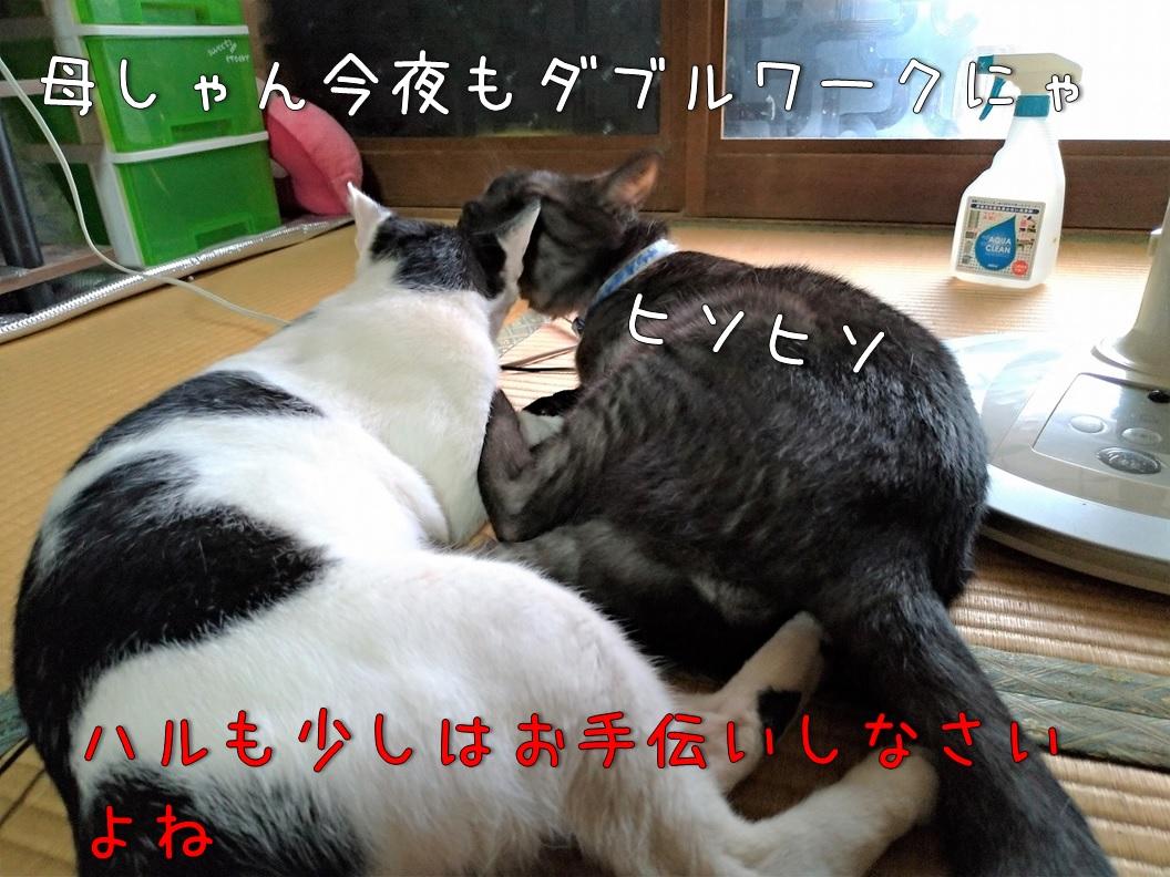 f:id:Harufuku:20200831171458j:plain
