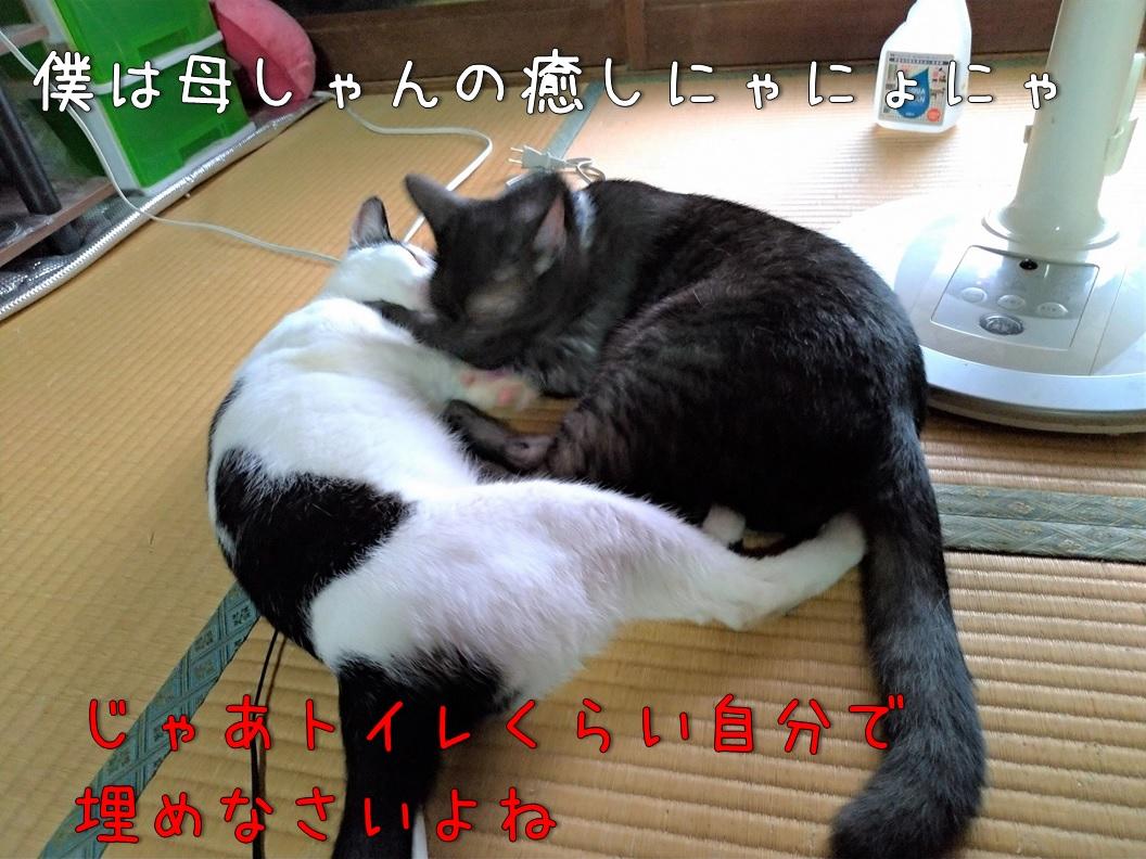 f:id:Harufuku:20200831171513j:plain