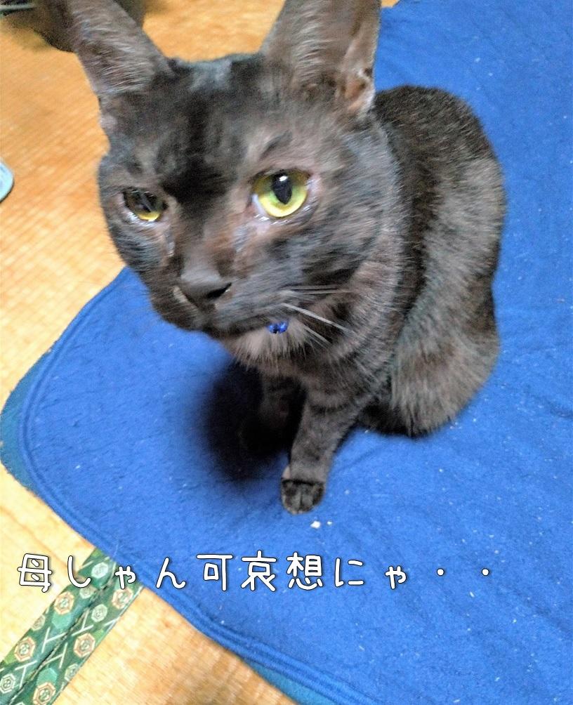 f:id:Harufuku:20200902172814j:plain