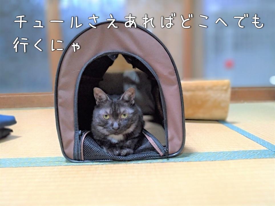 f:id:Harufuku:20200903112953j:plain
