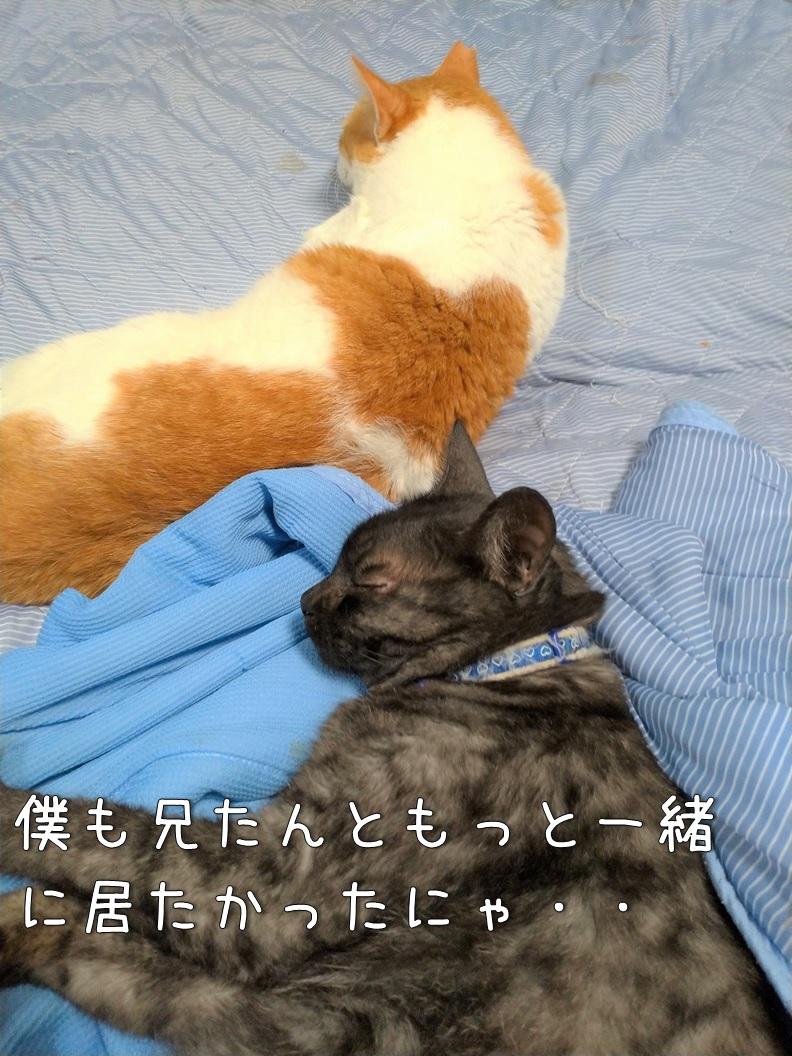 f:id:Harufuku:20200904134029j:plain