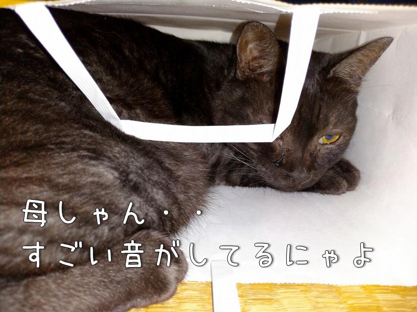 f:id:Harufuku:20200908111650j:plain