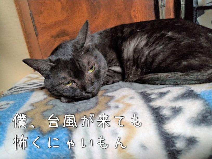 f:id:Harufuku:20200910114837j:plain
