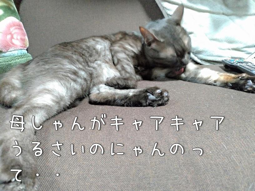 f:id:Harufuku:20200910122141j:plain