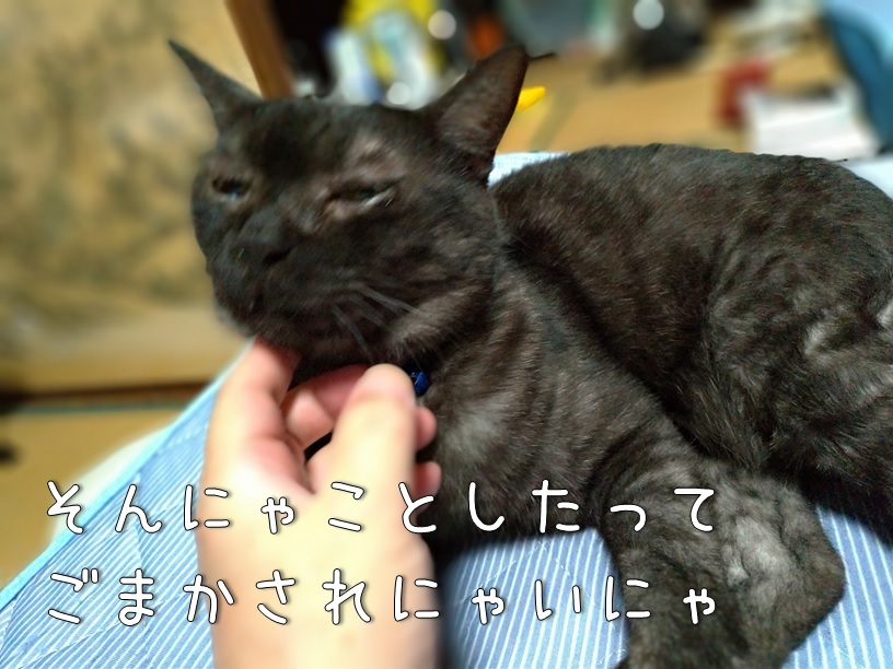 f:id:Harufuku:20200911122350j:plain