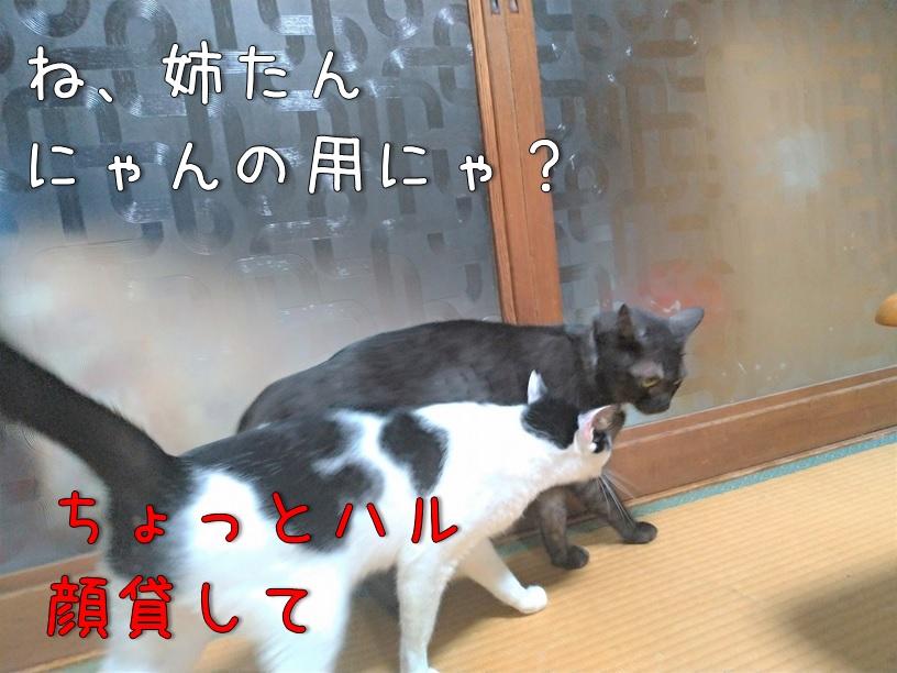 f:id:Harufuku:20200914105737j:plain