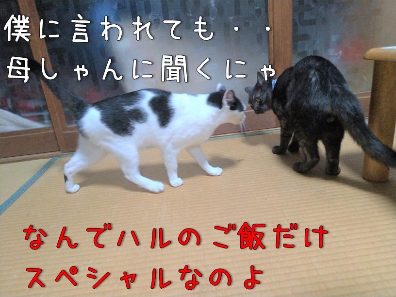 f:id:Harufuku:20200914105841j:plain
