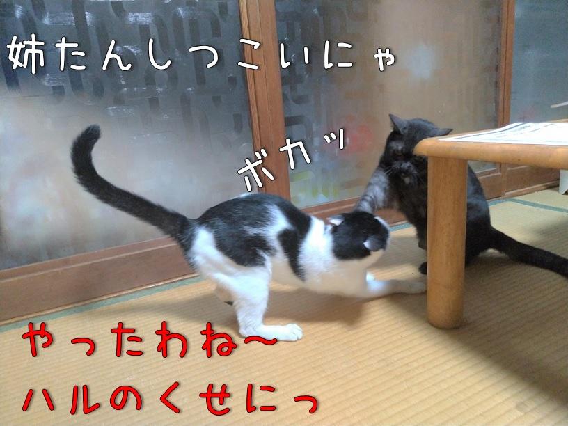 f:id:Harufuku:20200914110017j:plain