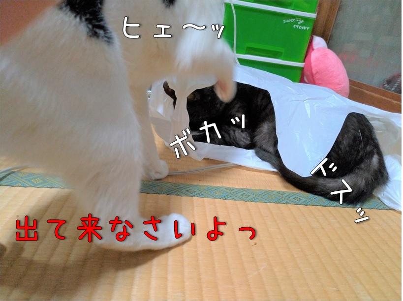 f:id:Harufuku:20200915122048j:plain