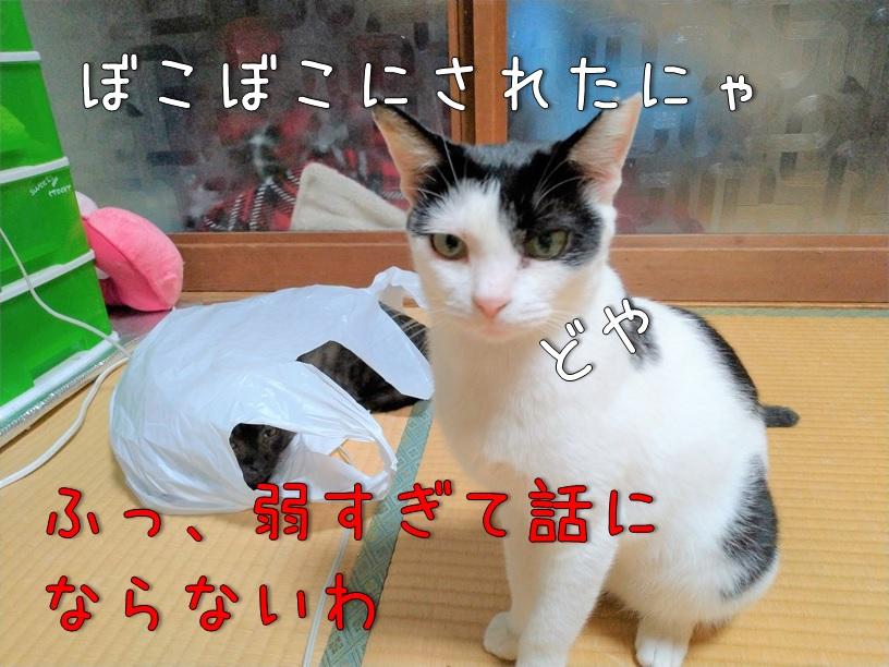 f:id:Harufuku:20200916113427j:plain