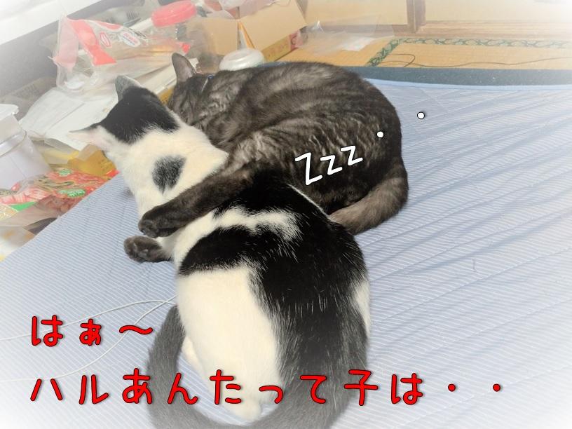 f:id:Harufuku:20200916113811j:plain