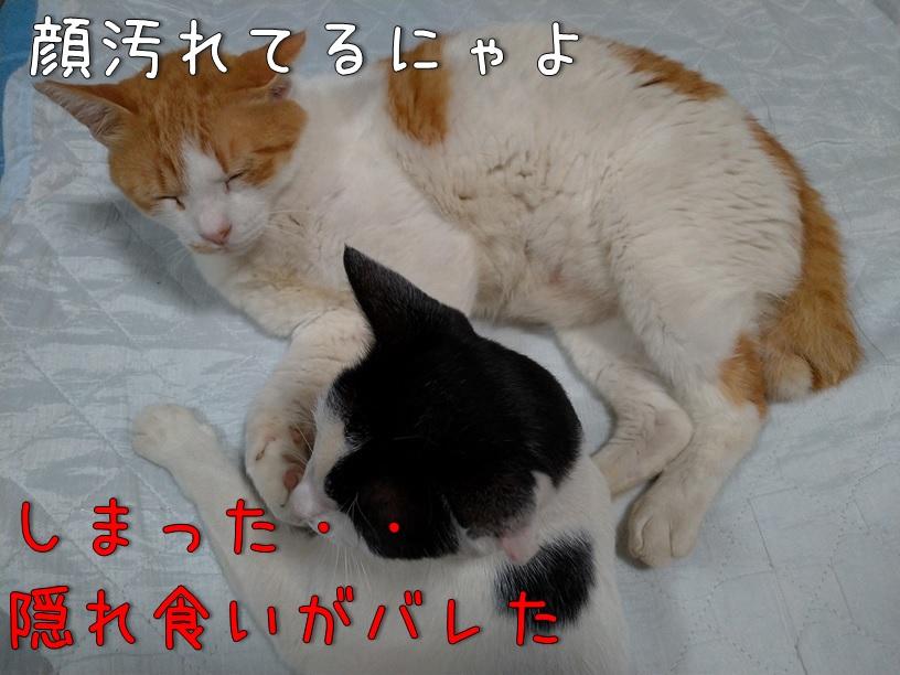 f:id:Harufuku:20200917111917j:plain