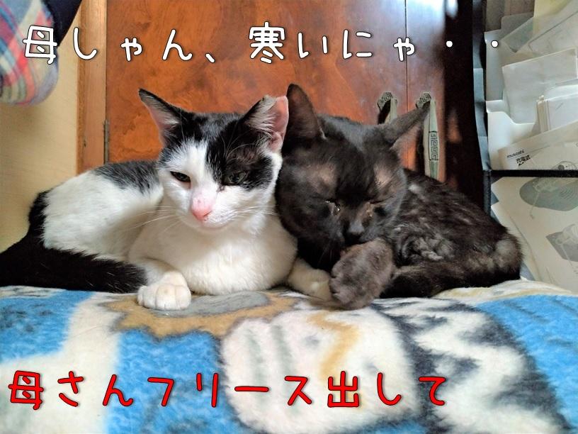 f:id:Harufuku:20200918112154j:plain