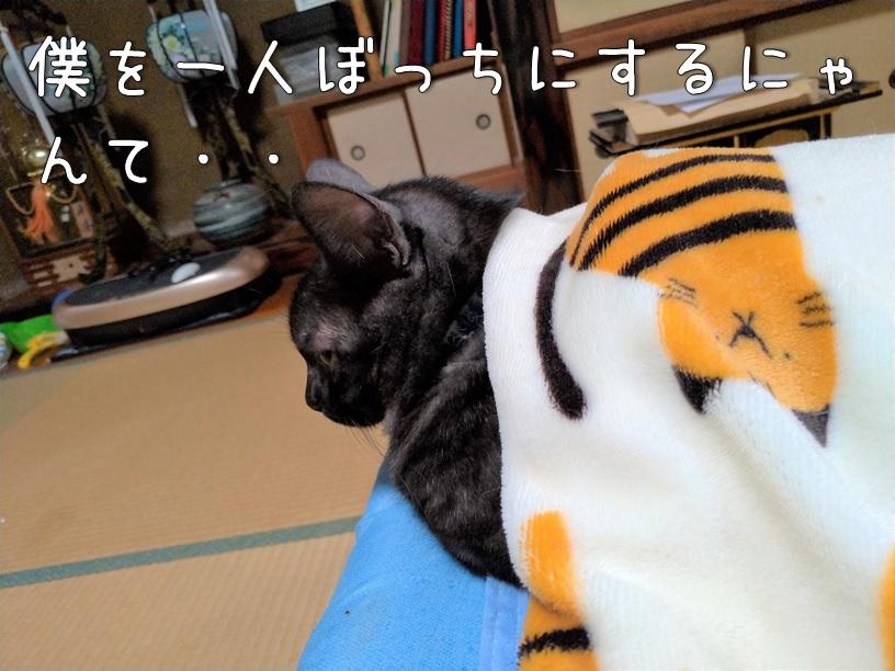 f:id:Harufuku:20200923160025j:plain