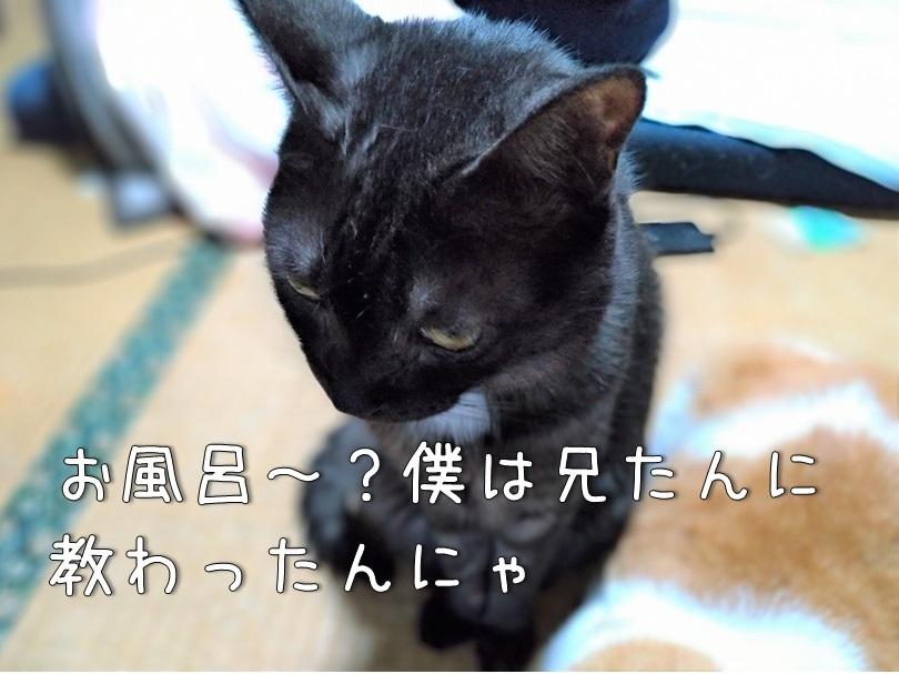 f:id:Harufuku:20200925160003j:plain