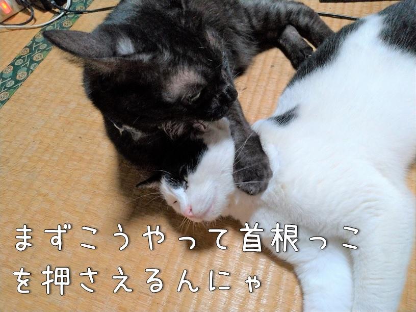 f:id:Harufuku:20200925160134j:plain