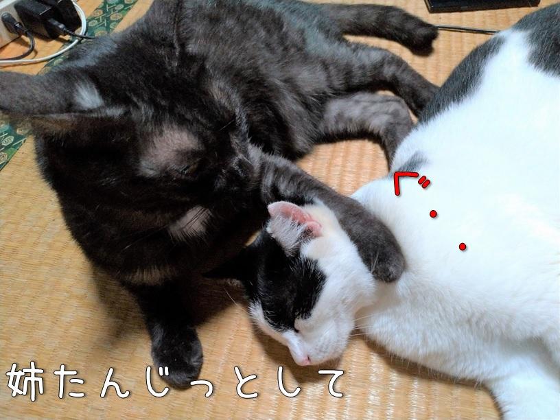 f:id:Harufuku:20200925160325j:plain