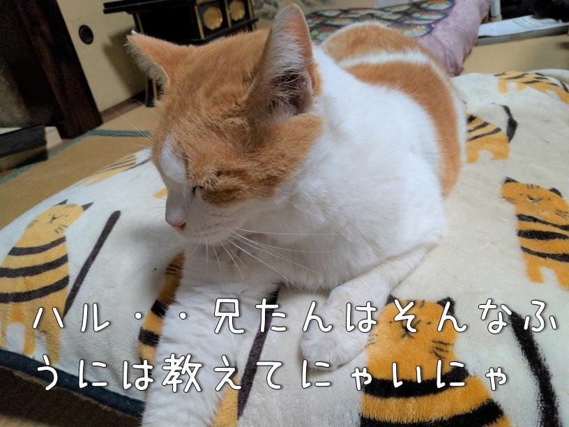 f:id:Harufuku:20200925160352j:plain