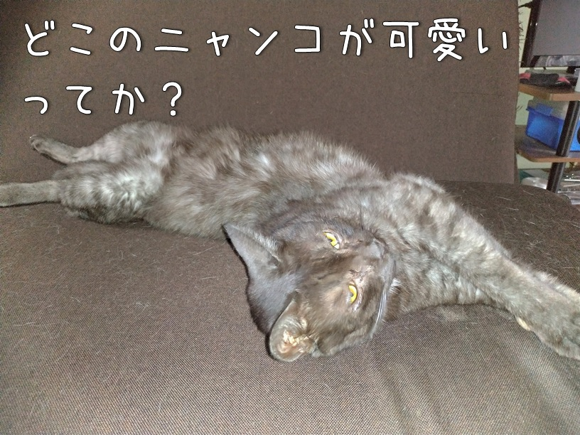f:id:Harufuku:20200928114207j:plain