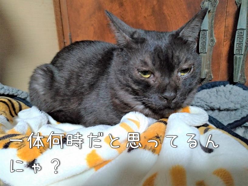 f:id:Harufuku:20210122172834j:plain