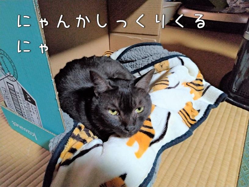 f:id:Harufuku:20210222154011j:plain
