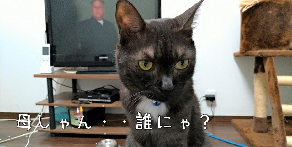 f:id:Harufuku:20211006170330j:plain