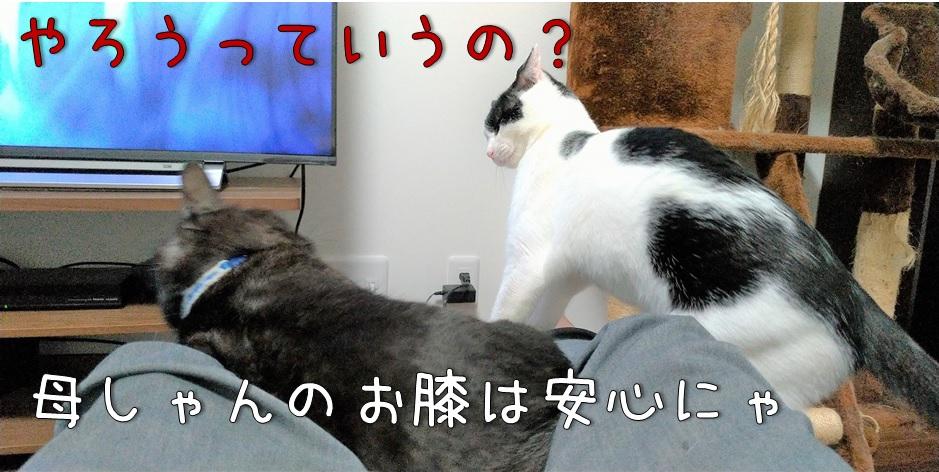 f:id:Harufuku:20211011172445j:plain