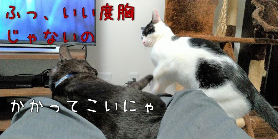 f:id:Harufuku:20211011172526j:plain