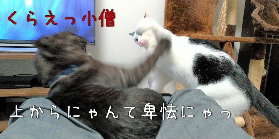 f:id:Harufuku:20211011172551j:plain