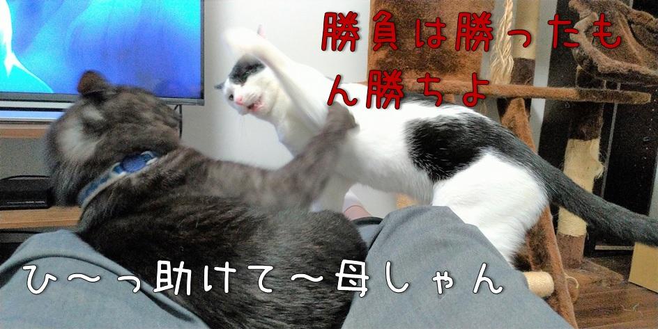 f:id:Harufuku:20211011172618j:plain
