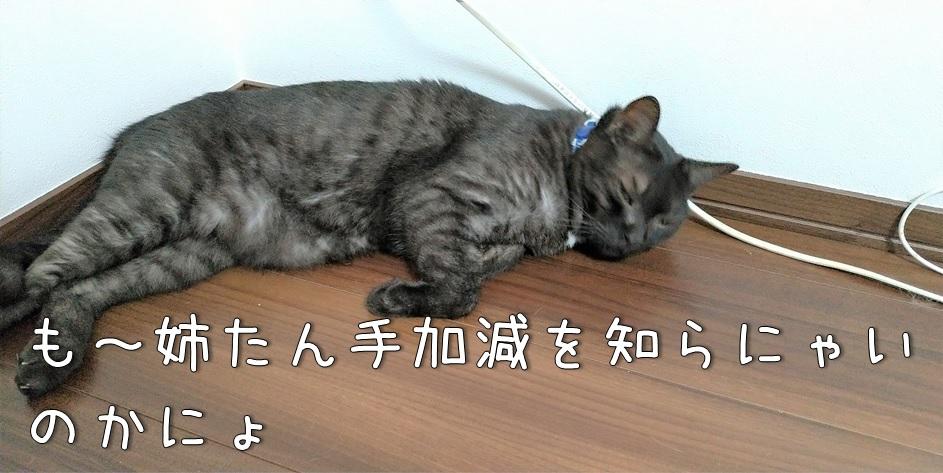f:id:Harufuku:20211011172703j:plain