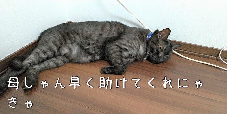 f:id:Harufuku:20211011172742j:plain