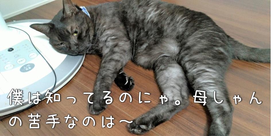 f:id:Harufuku:20211015173228j:plain