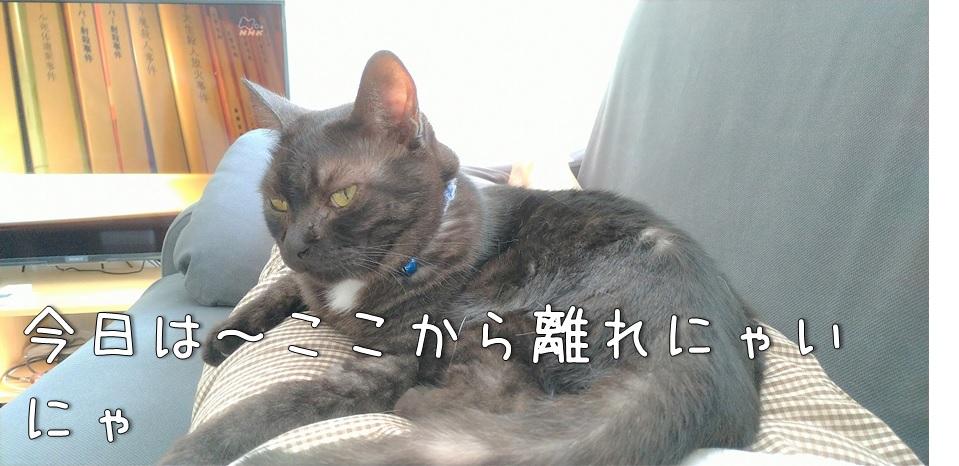 f:id:Harufuku:20211018162403j:plain