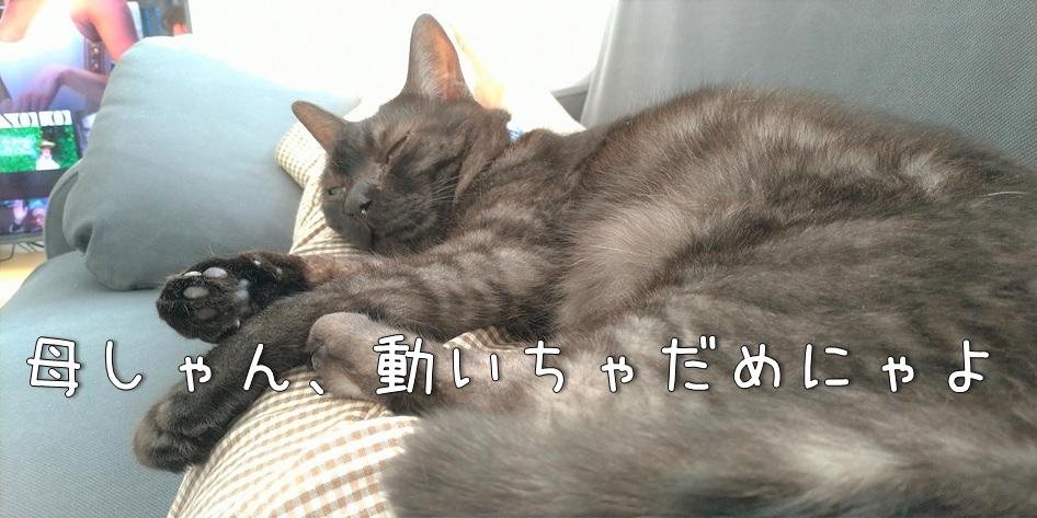 f:id:Harufuku:20211018162435j:plain