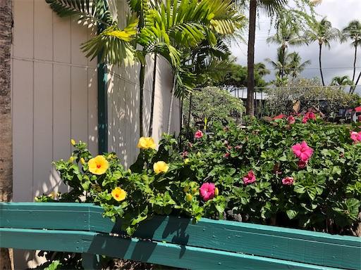 f:id:Hawaii_raoukona:20200526215912j:image