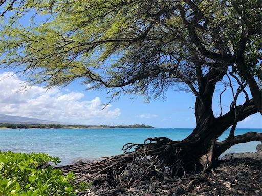 f:id:Hawaii_raoukona:20200920192833j:image