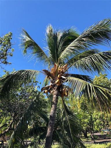 f:id:Hawaii_raoukona:20200922195050j:image