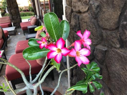f:id:Hawaii_raoukona:20200922202300j:image