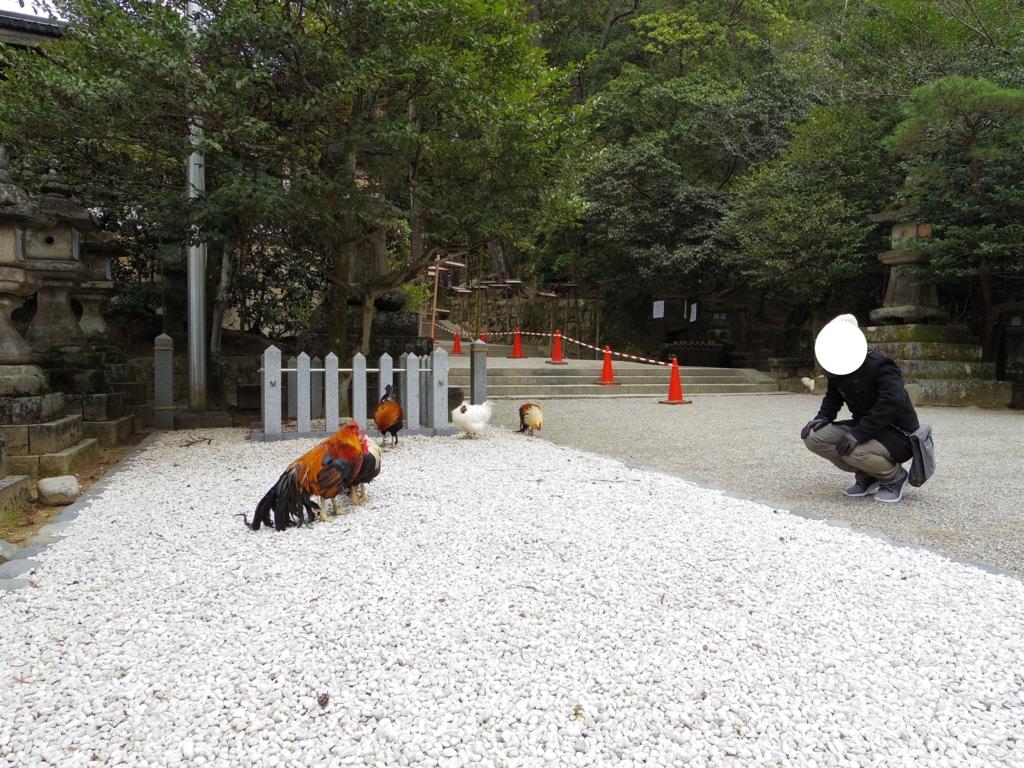 石上神宮ではカラフルな鶏と遊べます