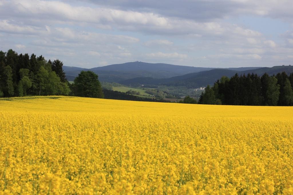 ドイツの景色いっぱいに広がる菜の花畑
