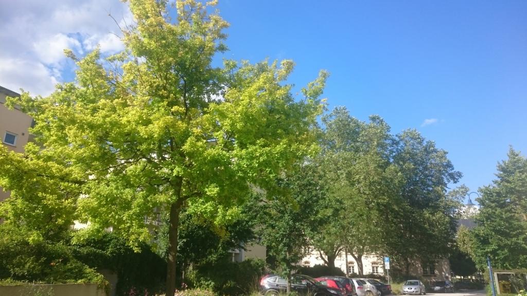 緑がれ映える初夏