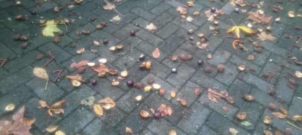秋といえば栗