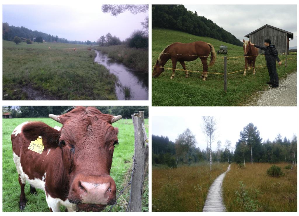 馬や牛と遊べる散歩道
