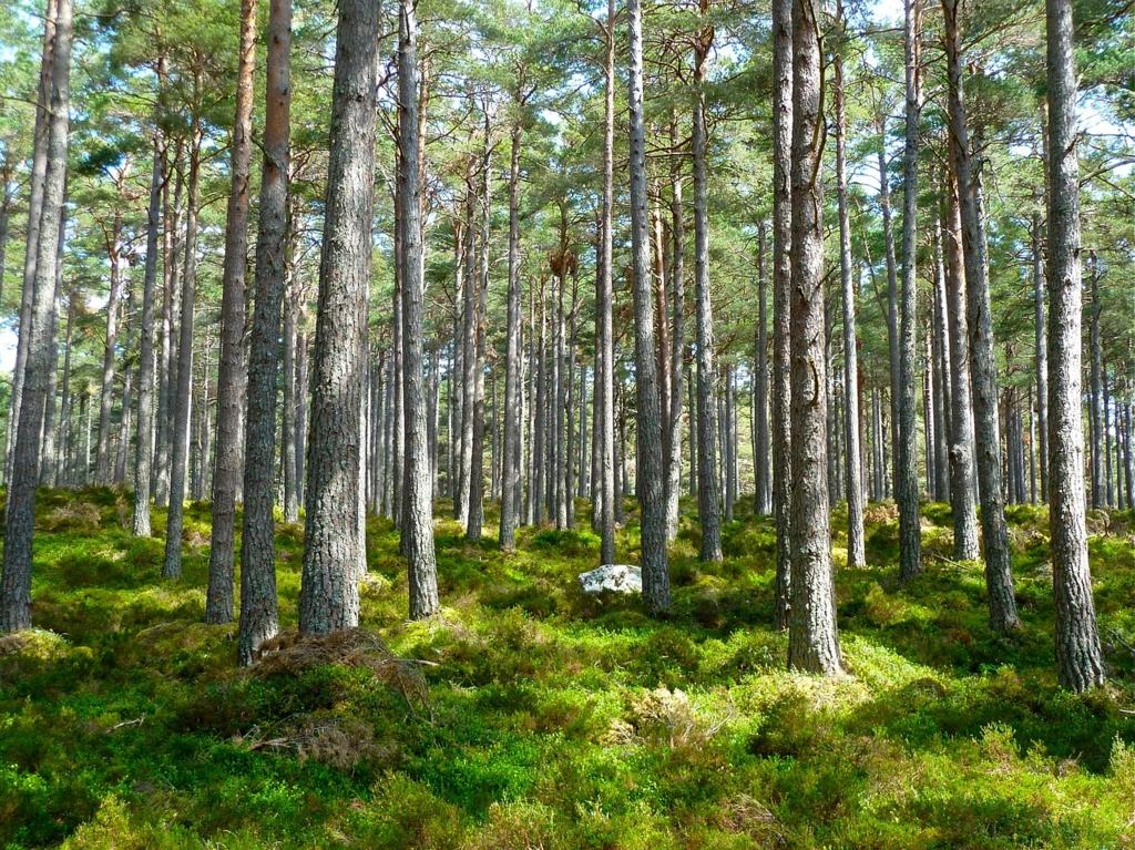 木々が乱立する林