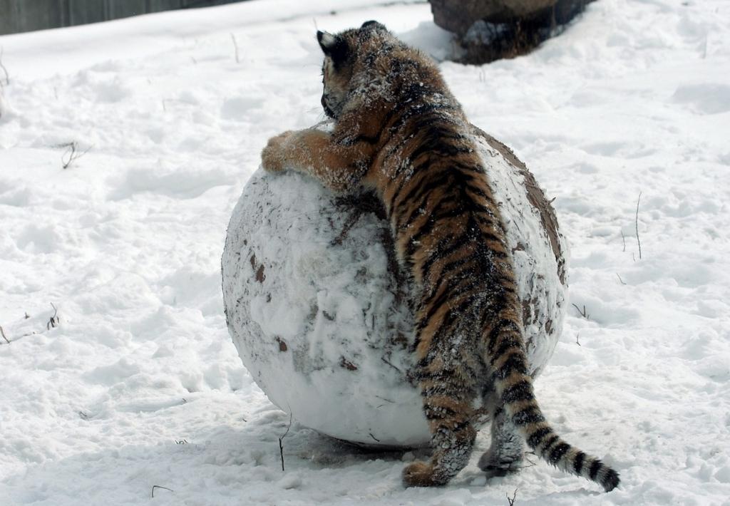 虎と雪だるま