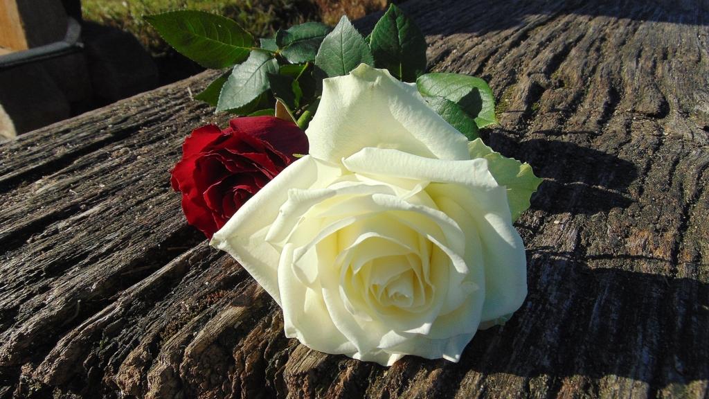 個性的な2本のバラ