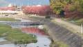 「京都新聞写真コンテスト 川面に映る紅葉
