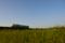 京都新聞写真コンテスト 麦畑に輝く信楽高原鐵道